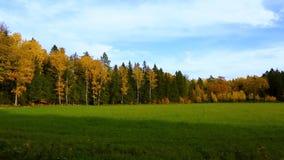 Het mooie landschap van het land in een de herfstdag Groene oranje bomen en nog groen grasgebied stock footage