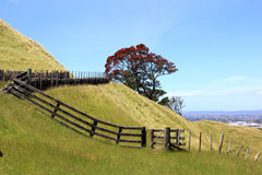 Het mooie landschap van Nieuw Zeeland met pohutukawa Stock Afbeelding