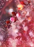 Het mooie magische effect bloeit met de herfstbladeren in de zonneschijn, uitstekend retro hipsterbeeld met de zomerbloei De herf Stock Afbeelding