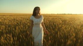 Het mooie meisje loopt over een gebied van rijpe tarwe en raakt oren van korrel met haar handen Langzame Motie Het lopen van de v stock videobeelden