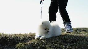 Het mooie meisje spelen met de hond stock video