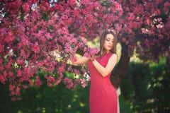 Het mooie meisje stellen aan de fotograaf tegen de achtergrond van bloeiende roze bomen De lente Sakura Stock Afbeeldingen