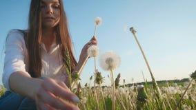Het mooie meisje verzamelt paardebloemen op groen gras stock video