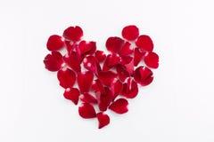 Het mooie mooie bloemblaadje mooie hart van rood nam toe Stock Afbeeldingen