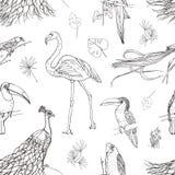 Het mooie naadloze patroon met tropische vogels en de exotische bladeren overhandigen getrokken met contourlijnen op witte achter stock illustratie