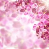 Het mooie Ontwerp van de het kadergrens van de Orchideebloem Stock Afbeelding