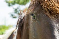 Het mooie Oog van het Paard Stock Afbeeldingen