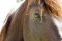 Het mooie Oog van het Paard Royalty-vrije Stock Afbeeldingen