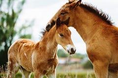 Het mooie paard eet gras op het gebied royalty-vrije stock foto's