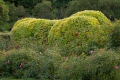 Het mooie park van de soignezomer royalty-vrije stock foto