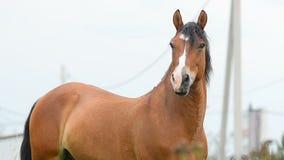 Het mooie Portret van het Paard stock video