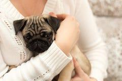 Het mooie pug puppy spelen met een meisje stock afbeelding