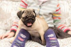 Het mooie pug puppy spelen met een meisje Royalty-vrije Stock Foto