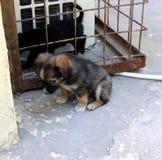 Het mooie puppy Royalty-vrije Stock Foto