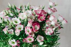 Het mooie romantische boeket van roze en witte eustoma bloeit macro op een witte achtergrond Royalty-vrije Stock Afbeelding