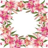 Het mooie roze kader van de leliegrens Boeket van bloemen Bloemendruk Tellerstekening vector illustratie