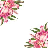 Het mooie roze kader van de leliehoek Boeket van bloemen Bloemendruk Tellerstekening vector illustratie