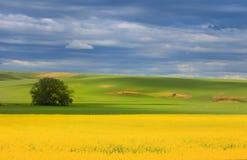 Het mooie schilderen als landschap Stock Foto's