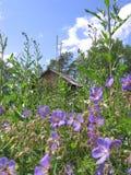 Het mooie Siberische landschap Rusland is een gebied van bloemen en een Kerk ver met een kruis stock afbeeldingen