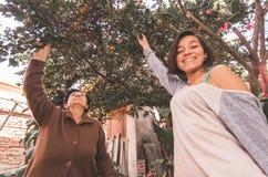 Het mooie Spaanse grootmoederkleindochter plukken Stock Foto's