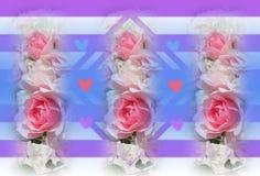 Het mooie strepen en hartenontwerp van bonica roze rozen royalty-vrije stock foto's