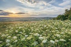 Het mooie vreedzame beeld van het zonsonderganglandschap over het Engelse rollen c Stock Fotografie