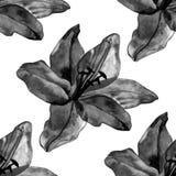 Het mooie zwarte naadloze patroon van leliesbloemen op witte achtergrond Stock Afbeeldingen