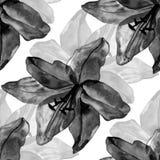 Het mooie zwarte naadloze patroon van leliesbloemen op witte achtergrond Royalty-vrije Stock Foto