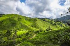 Het mooiste landschap bij theeaanplanting in Maleisië Stock Afbeeldingen
