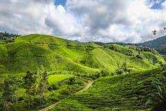 Het mooiste landschap bij theeaanplanting in Maleisië Stock Foto's