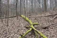 Het mos behandelde gevallen boom in bos stock afbeeldingen