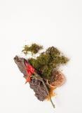 Het mos, de schors, de zoute, droge peper en een sinaasappel omcirkelen in recepten stock foto