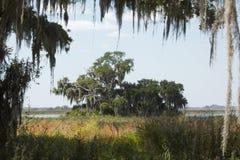 Het mos drapeerde takken maakt een kader op een meer van Florida stock afbeeldingen