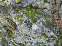 Het mos groeit op een grote steen royalty-vrije stock afbeeldingen