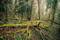 Het mos groeit op hout in Frankrijk stock foto