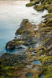 Het mos groeit op overzeese rots Stock Afbeelding