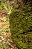 Het mos kweekt op gevallen login het Jedidiah-Californische sequoiabos stock fotografie