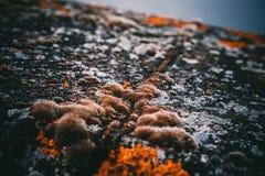 Het mos op de steen Stock Fotografie