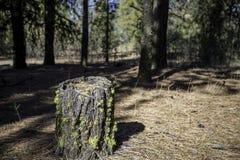 Het Mos van de boomstomp stock fotografie