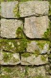 Het mos van de steenmuur royalty-vrije stock fotografie