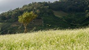 Het mosterdgebied met witte bloem in DonDuong - Dalat- Vietnam Stock Fotografie