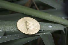 Het muntstuk Bitcoin lag in het donkergroene gras en het riet royalty-vrije stock foto