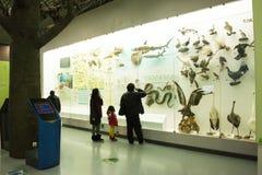 Het Museum van Aziatisch China, Peking, Peking van Biologie Royalty-vrije Stock Foto
