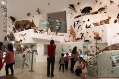 Het Museum van Melbourne Royalty-vrije Stock Afbeelding