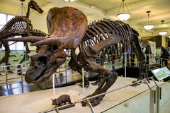 Het Museum van New York van Biologie Royalty-vrije Stock Foto