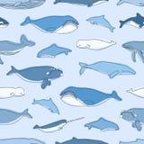 Het naadloze patroon met waterdieren of de mariene zoogdieren overhandigen getrokken op blauwe achtergrond - walvissen, narwal, d vector illustratie