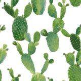 Het Naadloze Patroon van de cactusinstallatie Exotische Tropische de Zomer Botanische Achtergrond Stock Afbeelding
