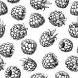 Het naadloze patroon van de framboos Vector tekening Geïsoleerde bessenschets op witte achtergrond vector illustratie