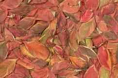 Het naadloze patroon van de herfst Stock Foto