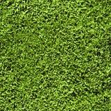 Het naadloze patroon van het gras Stock Afbeeldingen